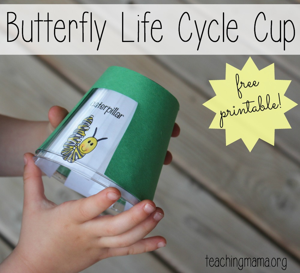 Life Cycle Of A Butterfly Craft For Preschool